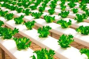 Indústria de alimentos lança estratégias para se adaptar às novas demandas de consumo