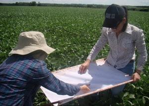 Manejo Integrado de Pragas pode trazer economia de cerca de R$ 4 bilhões a lavouras de soja no Pais