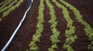 Produtores de orgânicos devem seguir recomendações para ter certificação de qualidade
