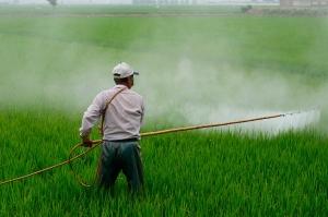 FPA defende mais incentivo para pesquisa de produção em larga escala sem pesticidas