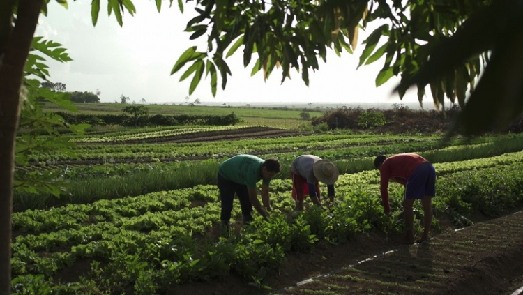 Brasil tem que crescer 40% na produção de alimentos em 10 anos