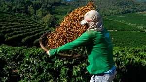 Veja como é produzido um dos cafés brasileiros mais premiados do mundo