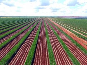 Antecipar plantio é risco grave para produtividade, diz especialista em sementes