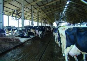 Custos estáveis garantem certa tranquilidade ao produtor de leite