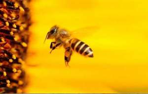 Tecnologia para reduzir a perda de abelhas