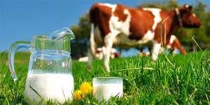 Parceria entre ABS e Nestlé leva o progresso genético e gera lucro para os produtores de leite