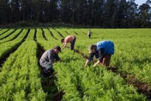 Ciclo de capacitações para agricultores familiares segue nesta semana