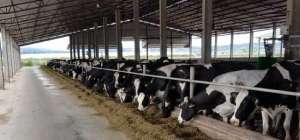 Interleite Sul 2020, Fabrício Nascimento: a mentalidade de sucesso na atividade leiteira