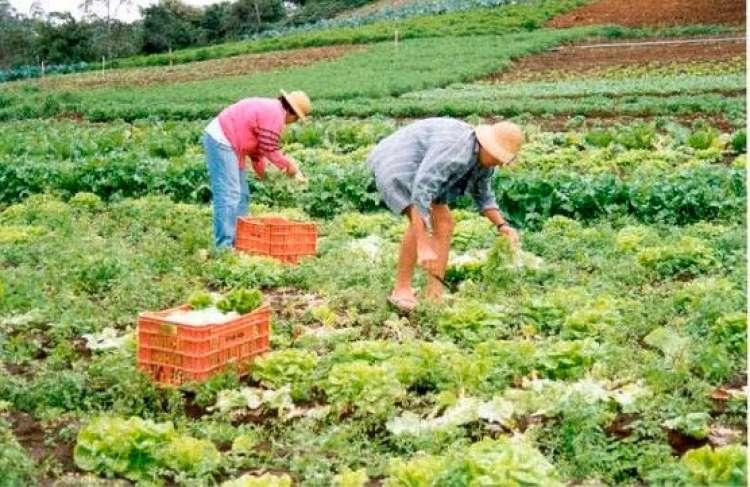Hortaliças produzidas em MT representam 42,7% do consumo total
