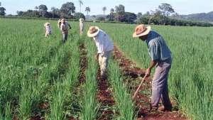 MT: população cresce devido ao agronegócio