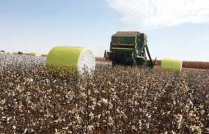 Colheitadeiras de algodão esgotam nas fornecedoras do Brasil para 2019