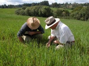 Agricultura familiar quer mais crédito e mudança na assistência técnica