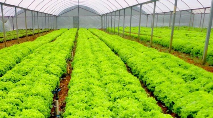 Horticultura de precisão propõe vantagens para produção
