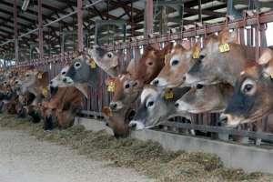 EUA: conservação ambiental em fazendas leiteiras tem retorno econômico