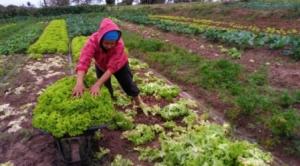 Prorrogação da validade da DAP beneficia milhares de pequenos produtores