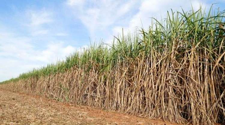 Valor exportado pela Região de Ribeirão Preto aumentou 937%
