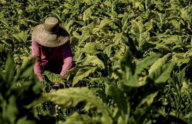 Agricultores devem ficar atentos às normas legais
