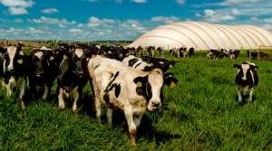 Brasil supera metas na pecuária sustentável com aproveitamento de dejetos animais