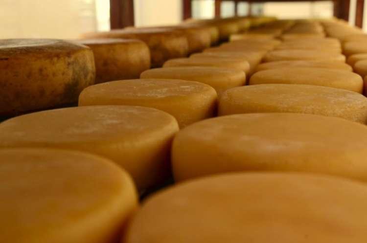 Epamig lança manual sobre fabricação de queijo Minas artesanal