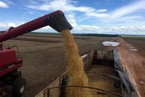China testa balanço da soja do Brasil e Conab revisita números de safras