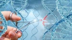 70 países adotaram lavouras biotecnológicas