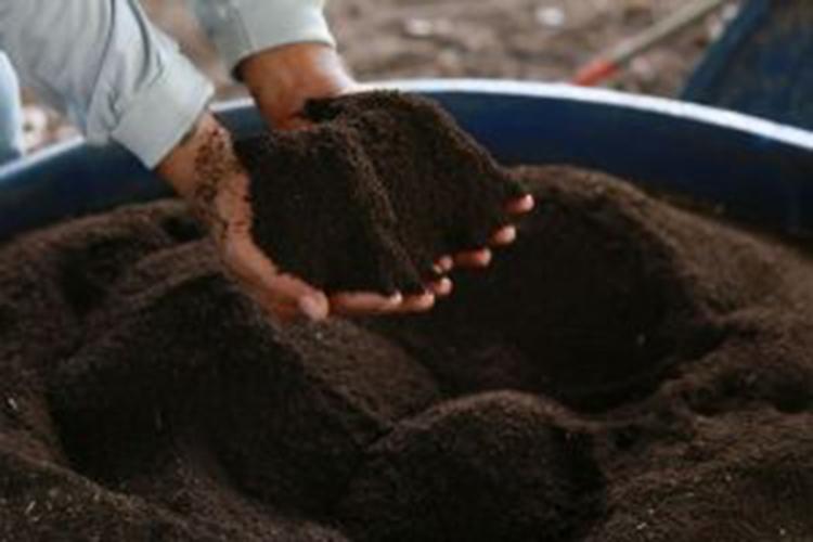 Publicações da Embrapa Amapá recomendam insumos e práticas de manejo em agroecologia