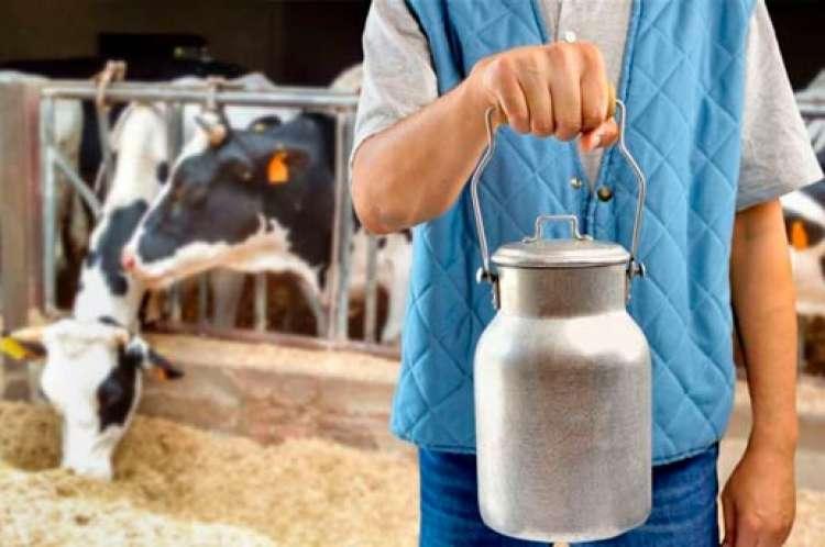 10 maneiras de melhorar o desempenho no início da lactação e o pico de produção de leite