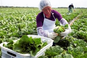 Ministério da Agricultura publica normas para comercialização de produtos hortícolas