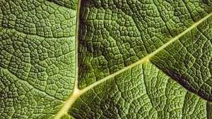 Microagulhas agilizam a detecção de doenças nas plantas