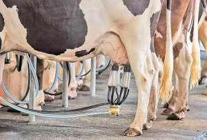 """""""Ideas for milk"""" impulsiona inovação no agronegócio"""