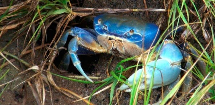 Portarias definem regras para pesca de espécies marinhas ameaçadas de extinção