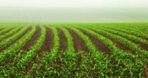 Ministra da Agricultura defende seguro rural ampliado; crédito para safrinha será para pequenos e médios