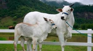 ILPF desponta como nova revolução agrícola