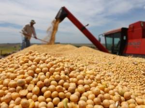 Queda em Chicago arrasta soja no Brasil