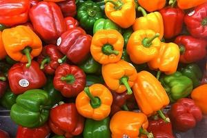 Agricultores do DF colhem pimentões; preços sobem após perdas em 2018
