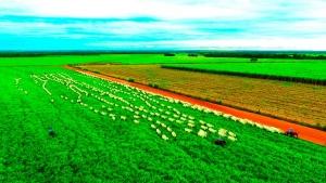 Aprovada urgência de projeto que permite fracionar propriedade rural