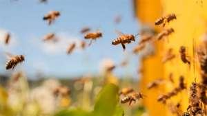 Vento incentiva a migração de insetos