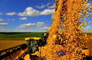Chicago: Mercado da soja recupera parte das perdas da sessão anterior com leve alta nesta 6ª