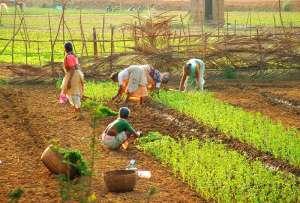 Agricultura biológica impulsiona sustentabilidade