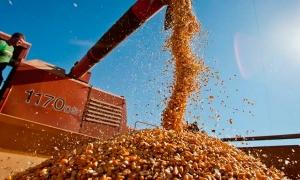 Tempo seco favorece a colheita do milho no Brasil central