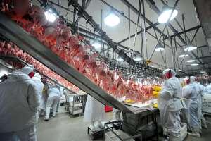 Brasil inicia exportação de carne de frango in natura para Índia