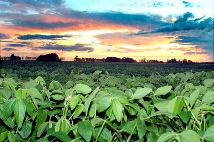 Paraná reduz pela metade uso de agroquímicos na soja