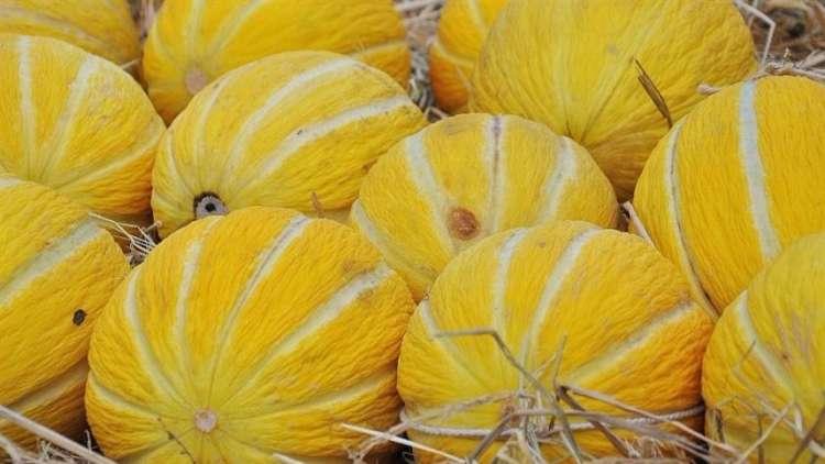Preços do melão registram queda nas regiões acompanhadas