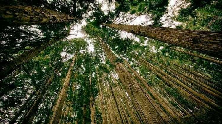 Governo edita MP que altera o Código Florestal e atende setor agrícola