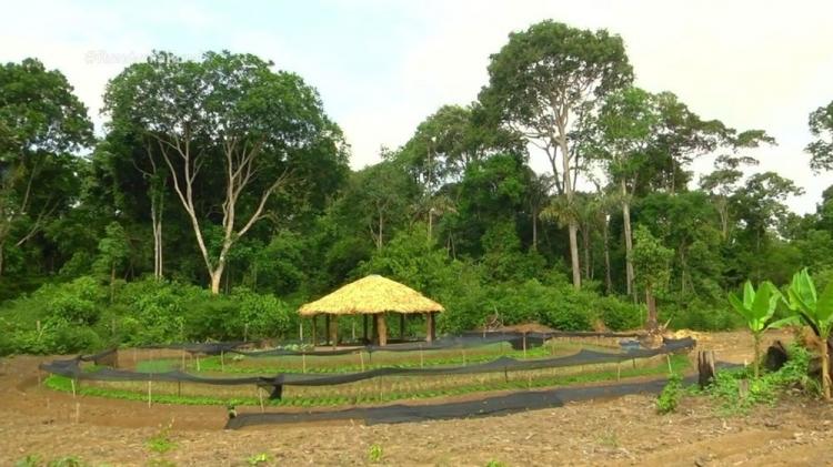 Sistema Mandala é implantado na produção agrícola de 30 propriedades rurais em RO
