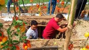 Yara reúne tomaticultores em workshop