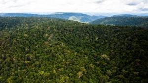 Explorações de madeira na Amazônia foram fraudadas, diz USP