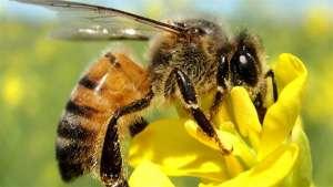 Para salvar as abelhas é preciso mudar colmeias