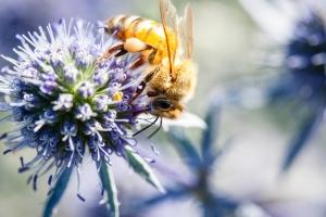 40% das espécies de insetos podem ser extintas nas próximas décadas