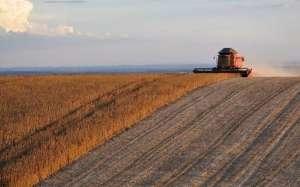 Medindo a incerteza: o risco da produção rural